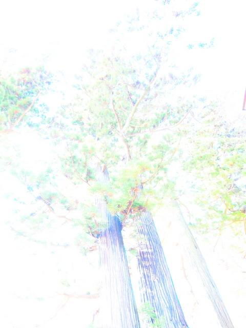 EB208646_1280x960.jpg